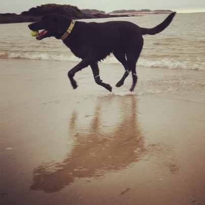 Playing fetch with Orvis at Kettle Cove