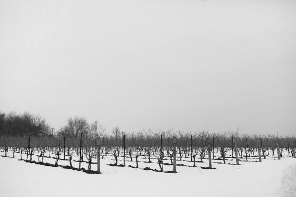 Jonathan-Edwards-Winery-North-Stonington