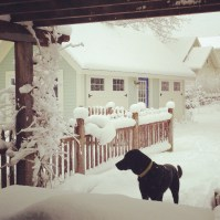 Another Snowy Day with Orvis