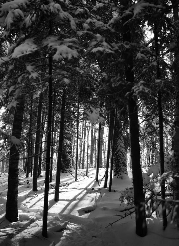 Wiscasset-Woods