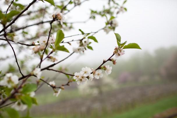 Charlottesville Spring