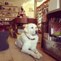 Rock Paper Scissors Shop Dog