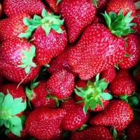 Fresh NC strawberries
