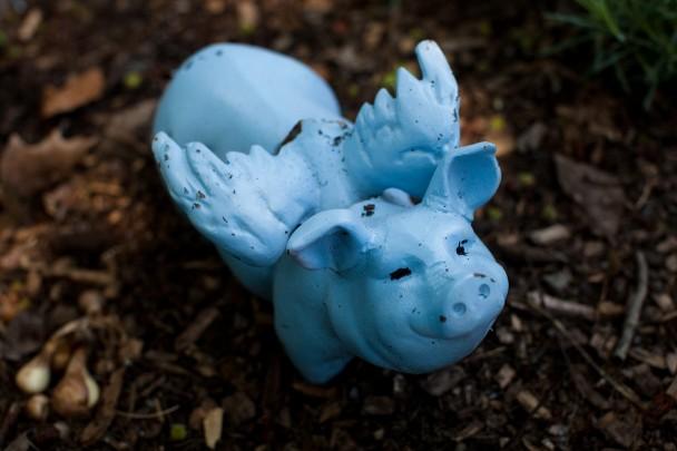 The Blue Pig