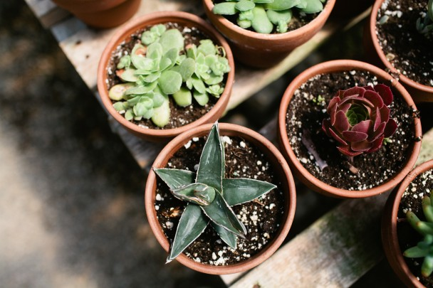 Succulents at Snug Harbor Farm