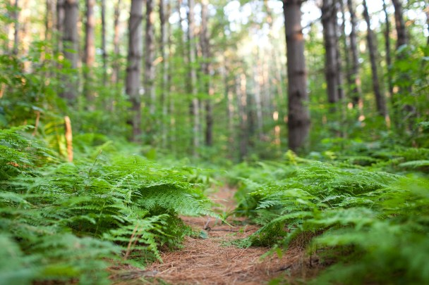 Ferns in Vermont