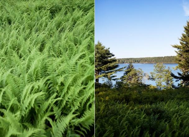 Isle of Springs Ferns