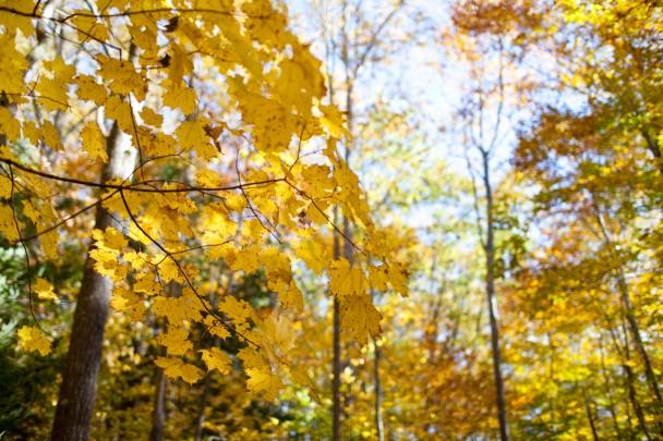 Fall at Bradbury Mountain