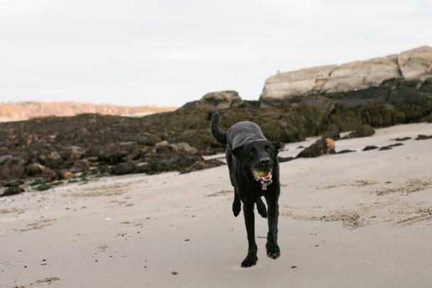 Orvis on Little Beach