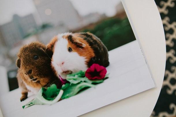 Rescue Pets of Boston Book Photos