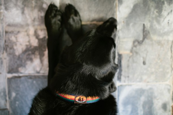 Skookum Dog Collar