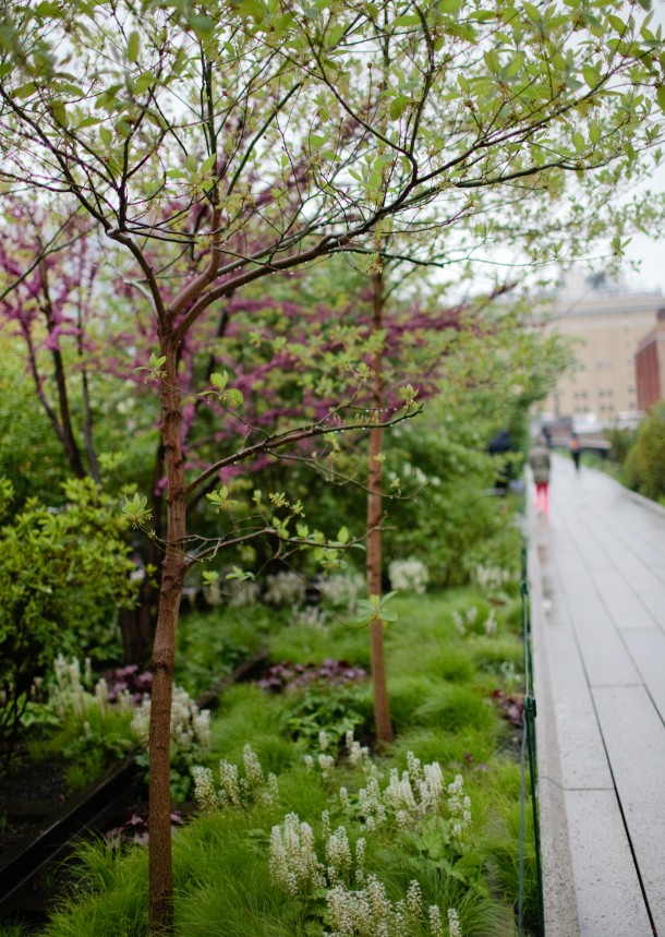 The High Line Spring