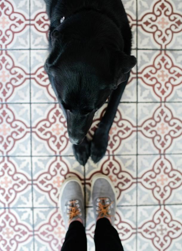Dog Friendly Hotel Fauchere