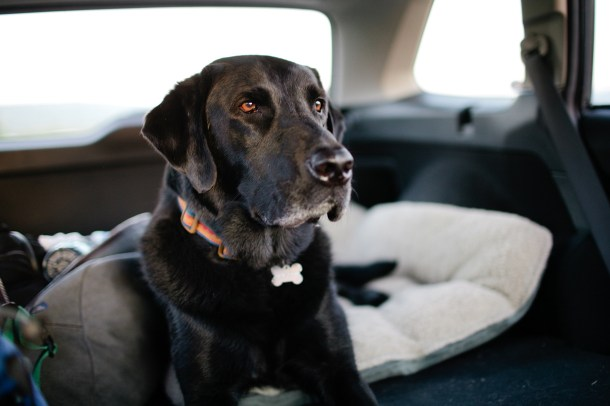 Road Trip with Orvis