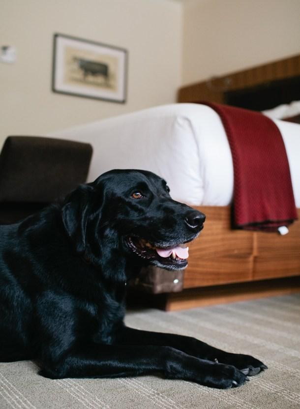 Topnotch Dog Friendly