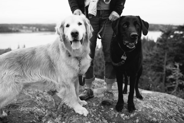 Dog Friendly North Haven Maine