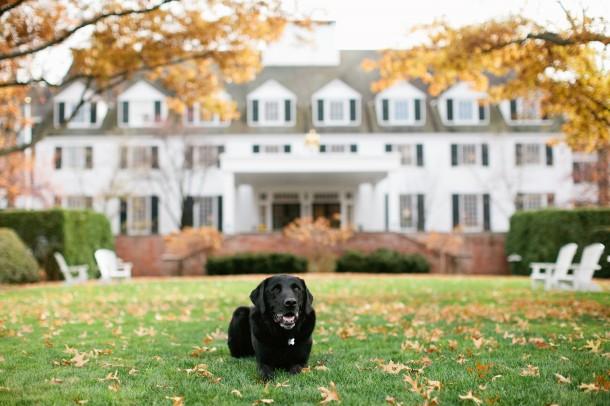 Woodstock Inn and Resort Vermont Dogs