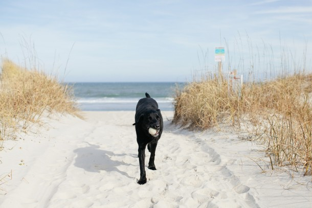 Dog Friendly NC Beaches