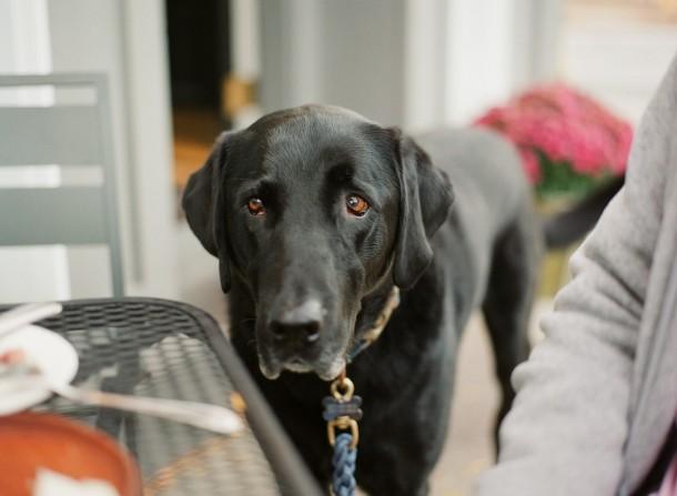 Dog Friendly Restaurants Maine