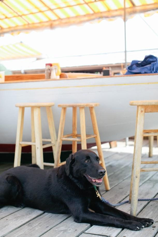 boat-bar-dog-friendly