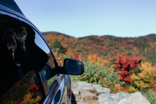 Leaf Peeping in NH