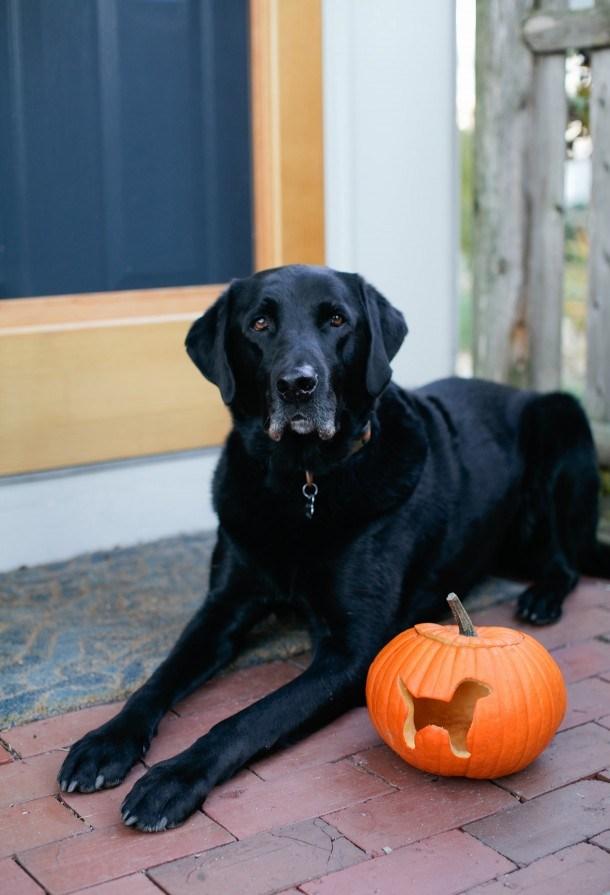 dog-pumpkin