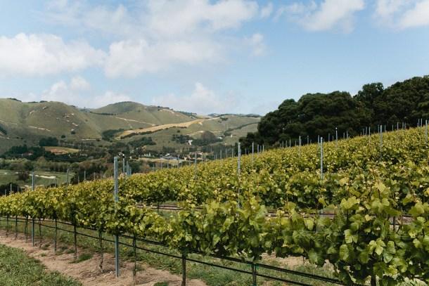 Carmel Valley Ranch Vineyards