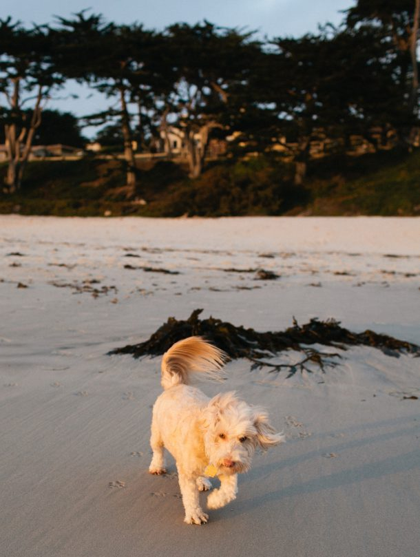 Dog Friendly Carmel California