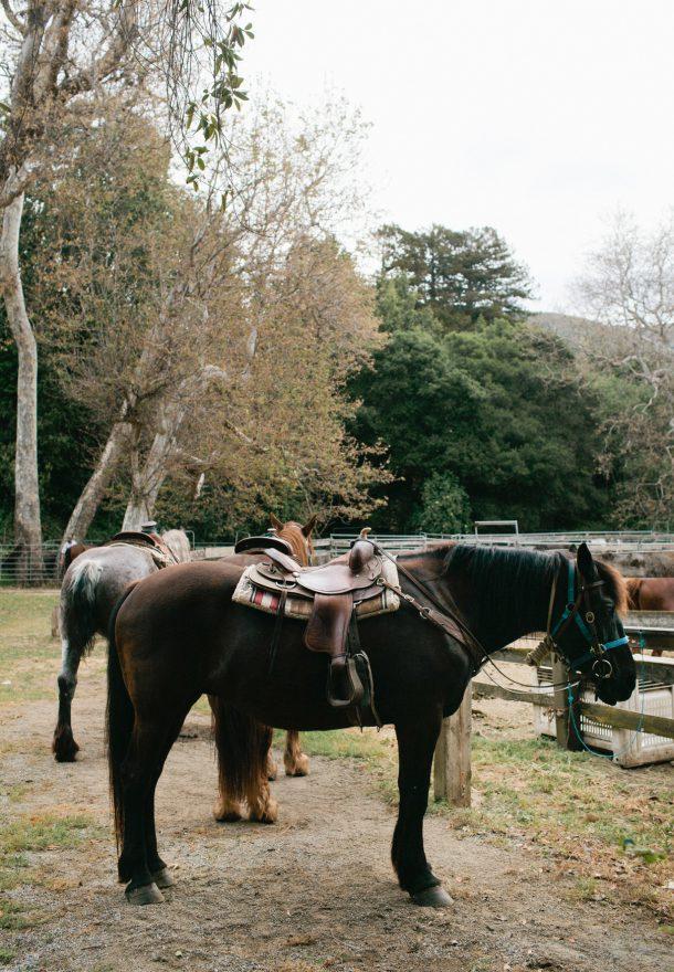 Molera Horseback Riding Tours