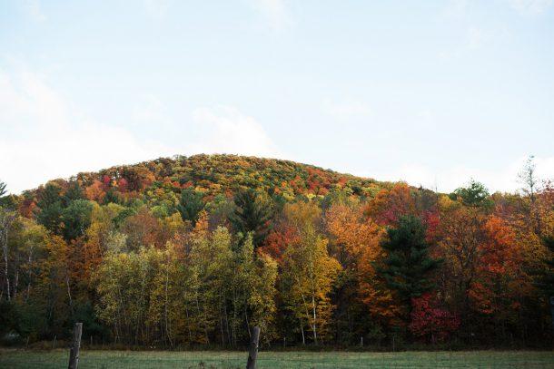 Maine Foliage
