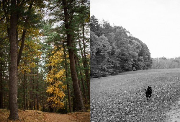 Maudslay State Park Dog Friendly