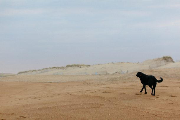 Dog Friendly Blue Inn on Plum Island by Map & Menu