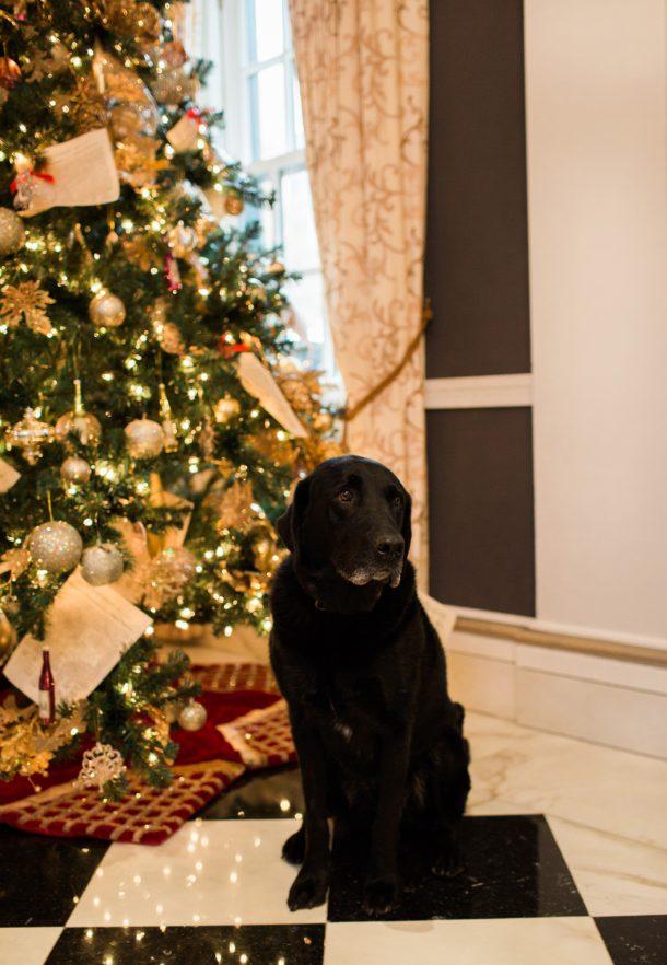Dogs at The Jefferson Hotel, Washington DC by Map & Menu