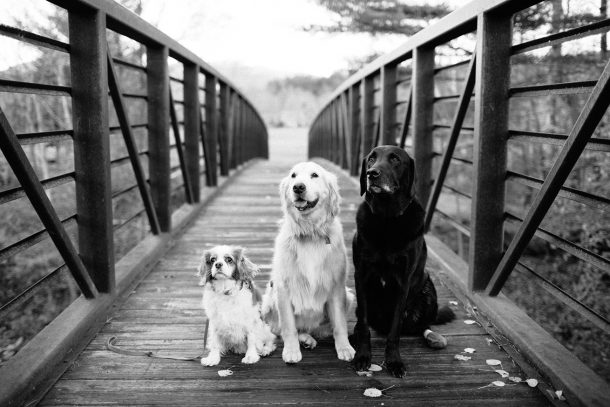 Dog Friendly Topnotch Resort Stowe, Vermont
