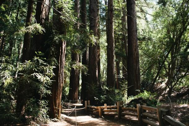Big Sur California Travel Guide by Map & Menu