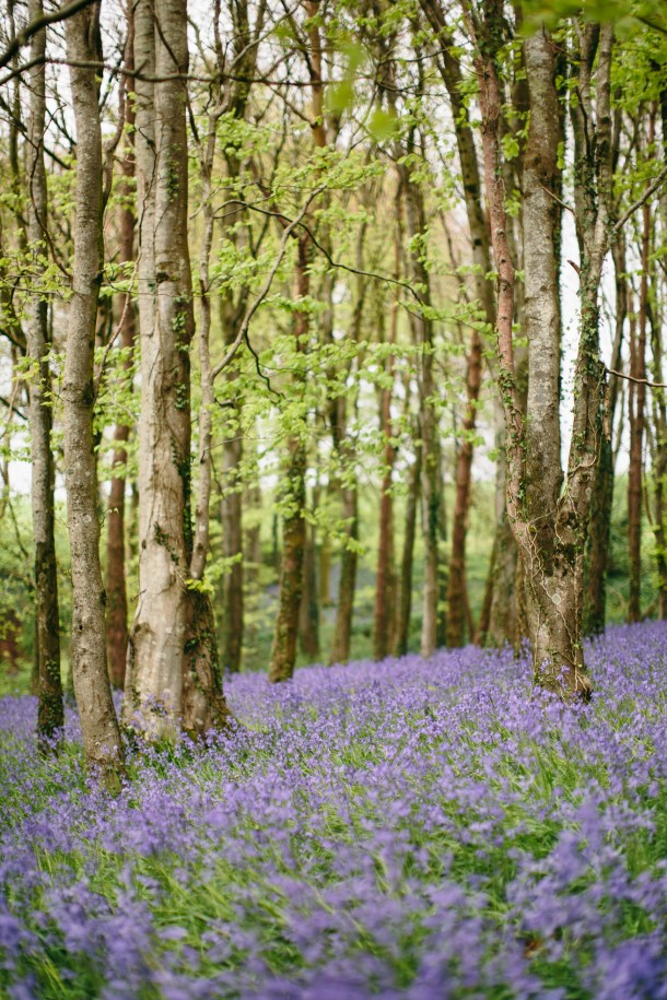 Bluebell Fields, Dorset Travel Guide by Map & Menu