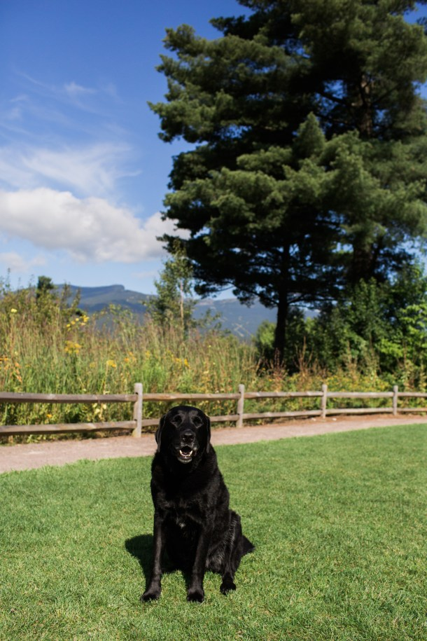 Dog-Friendly Topnotch Resort on Map & Menu