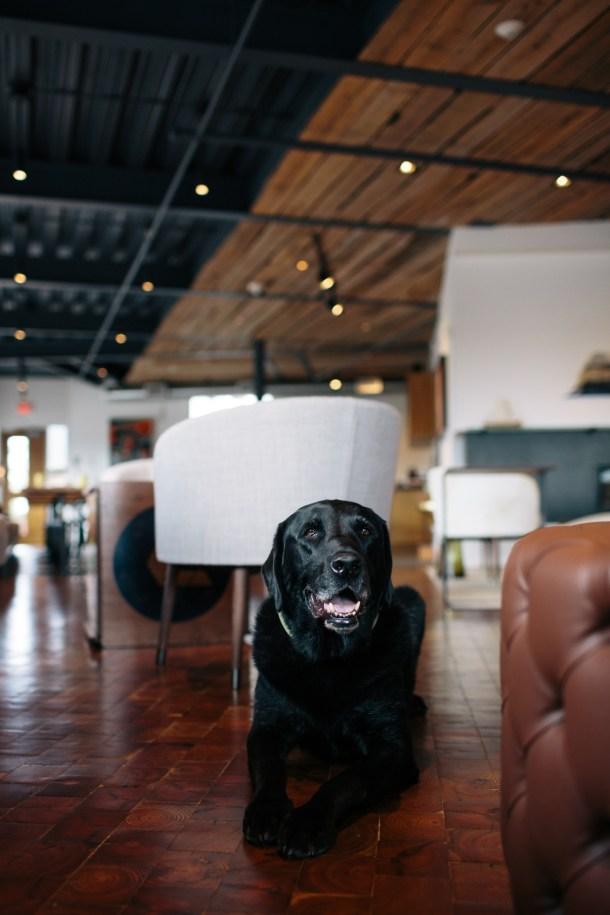 Dog Friendly 250 Main Hotel on Map & Menu
