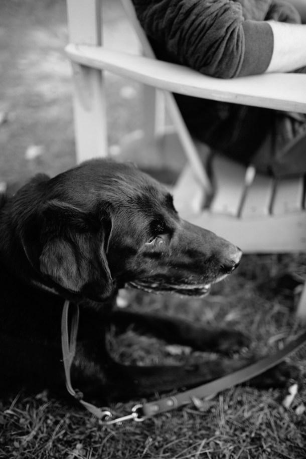 Pet Friendly Manoir Hovey Hotel Tour on Map & Menu