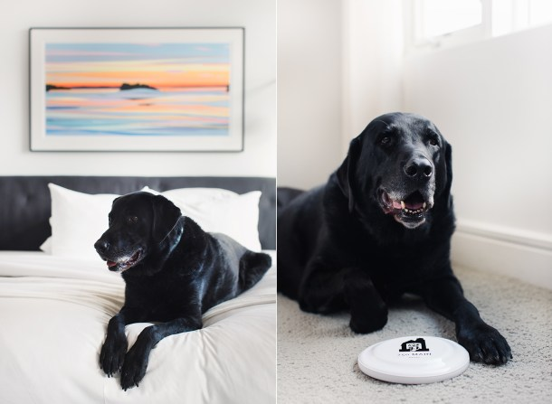 Dog Friendly Hotels Maine