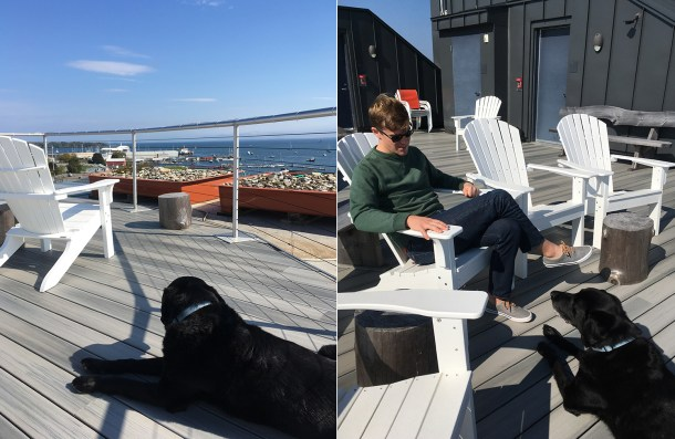 Dogs at 250 Main Hotel Rockland