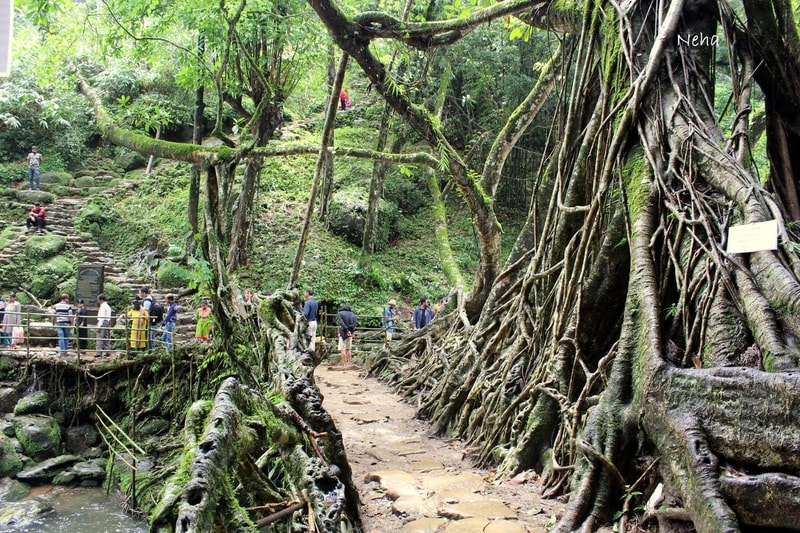 Best time to visit Shillong and Cherrapunji is when you can see places like the Living Root Bridge with relatively fewer crowds!