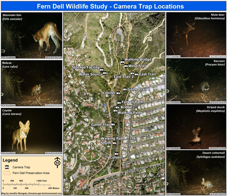 Fern Dell Camera Trap Map