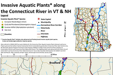 Invasive Aquatic Plants CT River