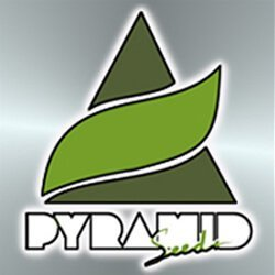 Pyramide seed