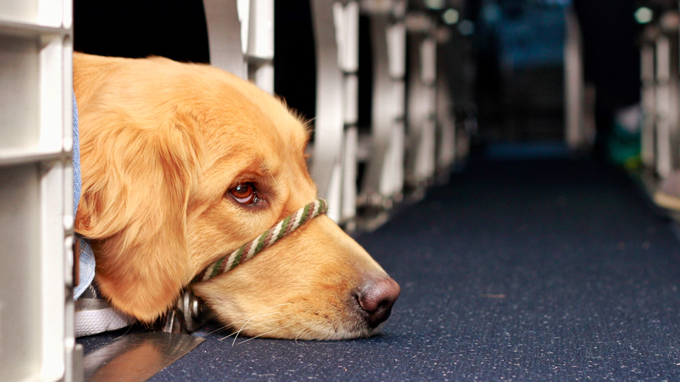 The Complete Guide To Bringing an Emotional Support Animal Onboard via @maphappy