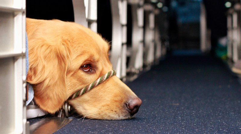 The Complete Guide To Bringing an Emotional Support Animal Onboard