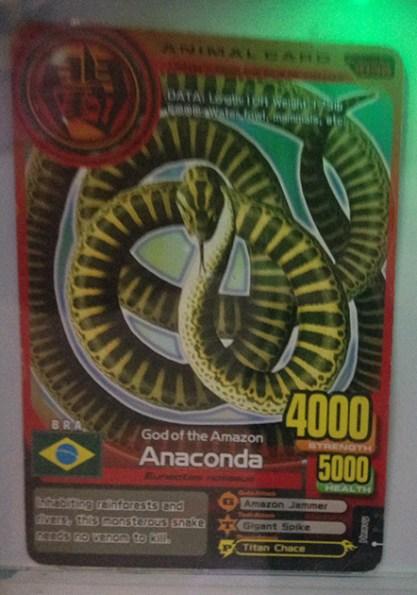 anaconda-animalkase