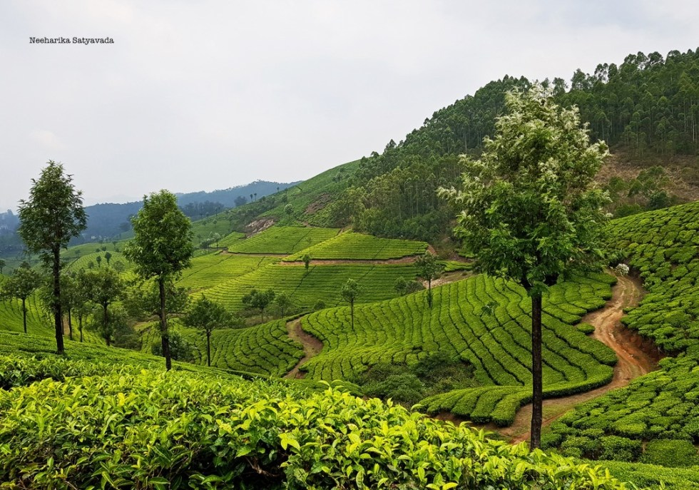 Must See Kerala Munnar Tea Plantations