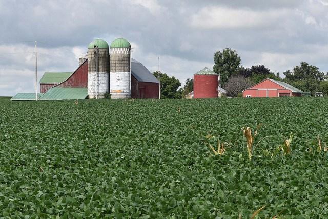 Dairy Farm, St. Jacobs area, Ontario